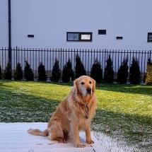 Куче Чопър на веранда