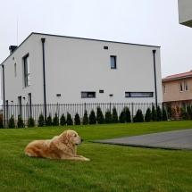 куче, Чопър, двор, къща, Бриз, Варна