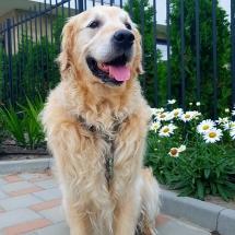 Куче Чопър на тротоар. Бриз Варна